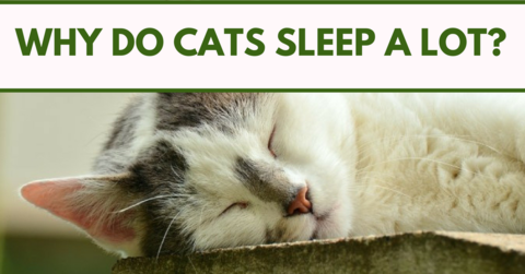 Why Do Cats Sleep A lot? Cat sleeping, Cats, Dog cat