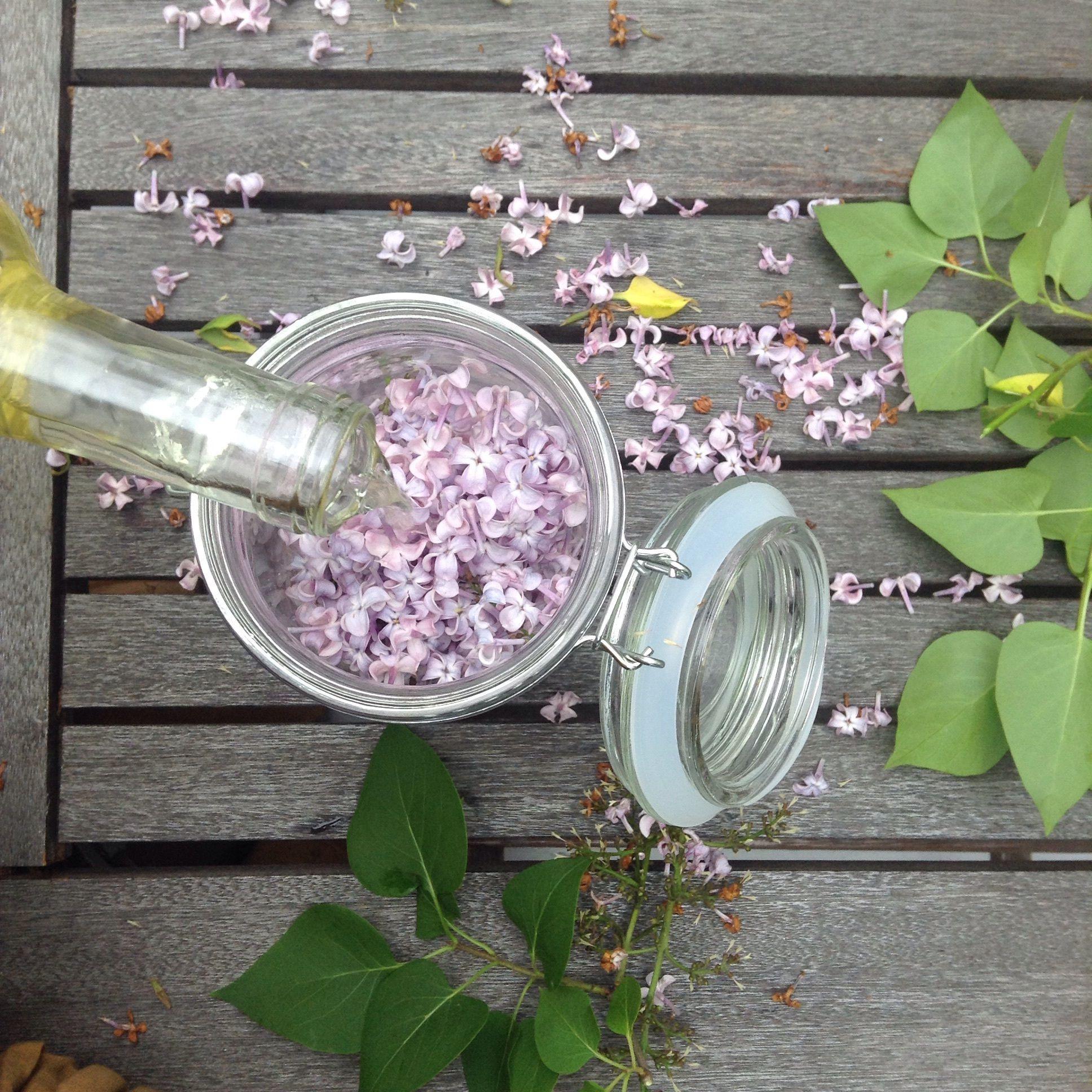 Sweet Lilac Wine G T Lilac Lilac Tree Wine Recipes