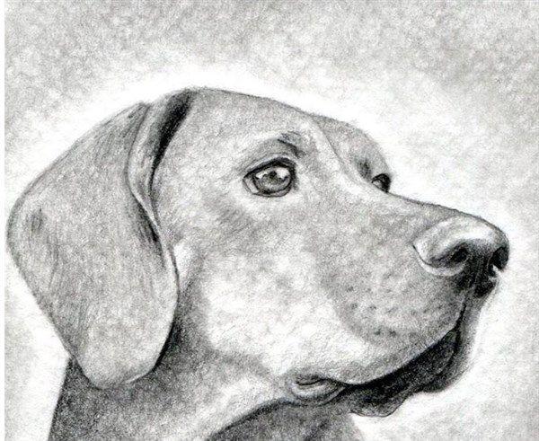 Como Aprender A Dibujar Animales Domesticos A Lapiz 9