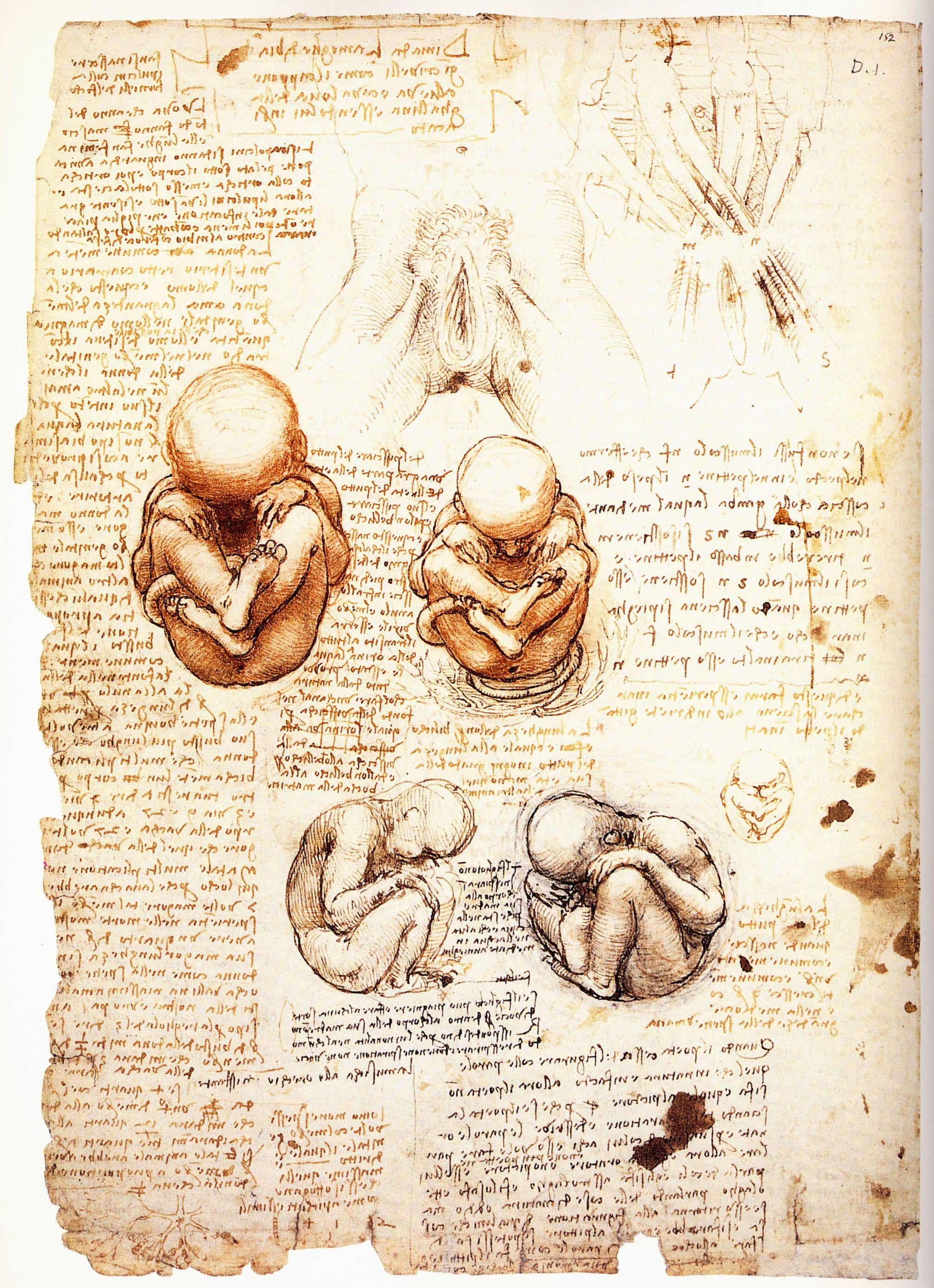 Amazing drawings by Leonardo da Vinci