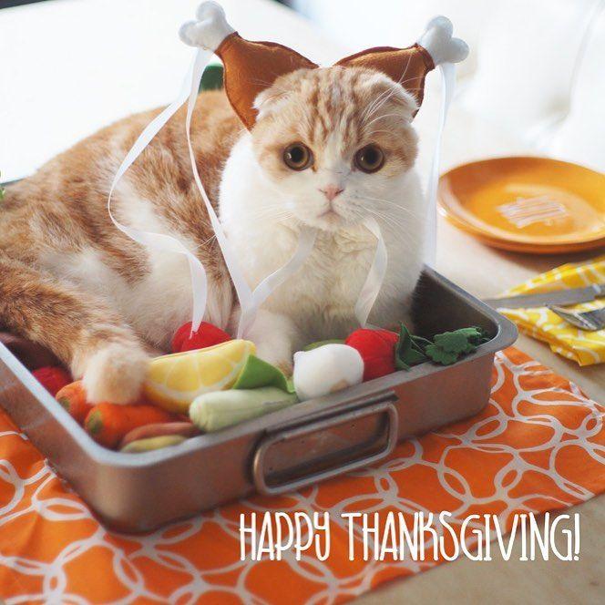 Flashbackfriday Thanksgiving Kitten Kitty Kittens Pet Pets Animal