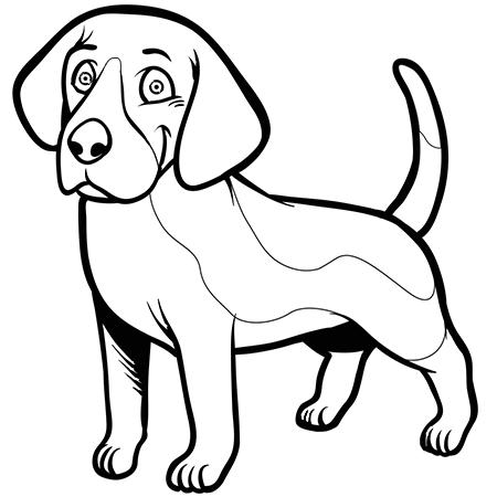 Dessin chien beagle a colorier chiens pinterest - Chiot beagle gratuit ...