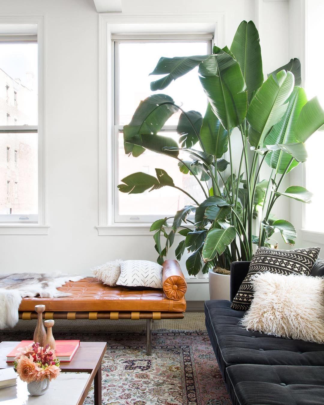 Große Pflanzen im Wohnzimmer | #connox #beunique | Indoor ...