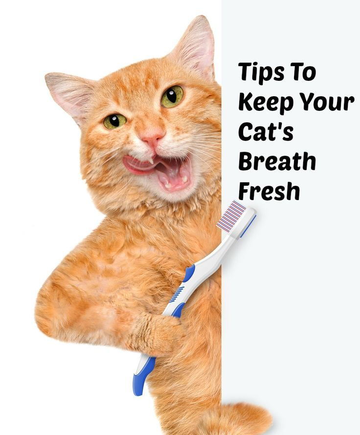 Bad Breath In Cats Tips To Keep Your Cat S Breath Fresh Cat Breath Bad Breath Remedy Oral Care Routine