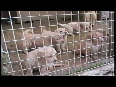 PLEASE SHARE!!! WE MUST STOP PUPPY MILLS WORLD WIDE