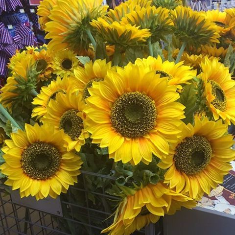Spotted In Acmoore Sunflower Either We Have Giant Sunflowers Or Our Stores Have Shrunk Honeyishrunktheacmoor Sunflower Flowers Instagram Posts