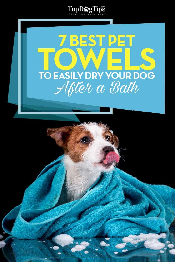 Best Dog Towel Top 7 Choices For Drying Dogs After A Bath 2017