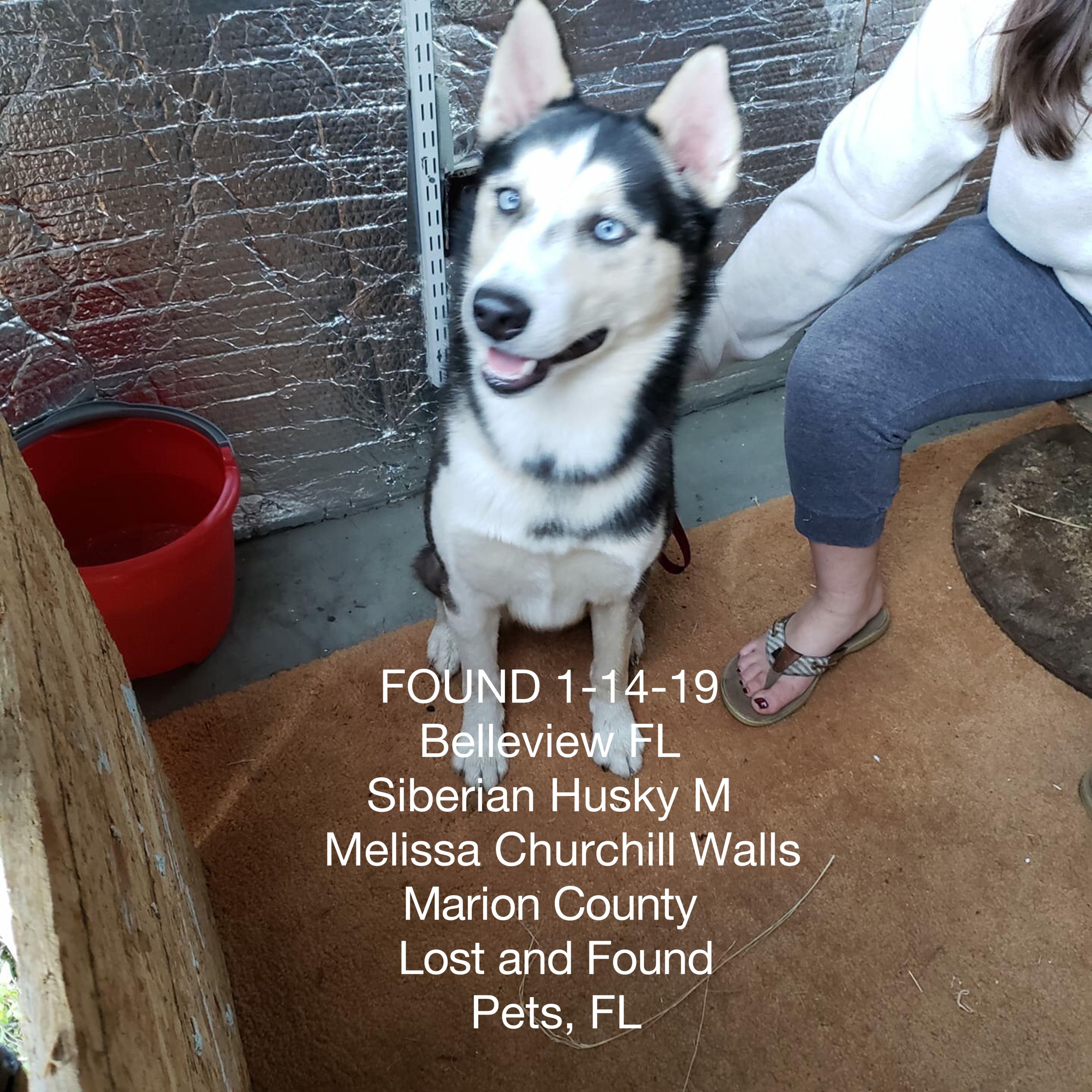 Help Losing A Dog Losing A Pet Pets