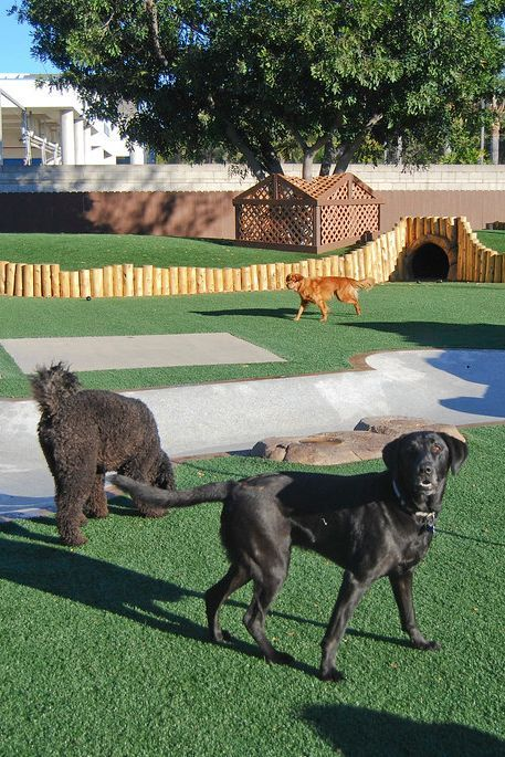 The Bone Adventure   Commercial Pet Facilities & Shelters ...
