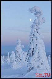 66,  #Winterbildernatur