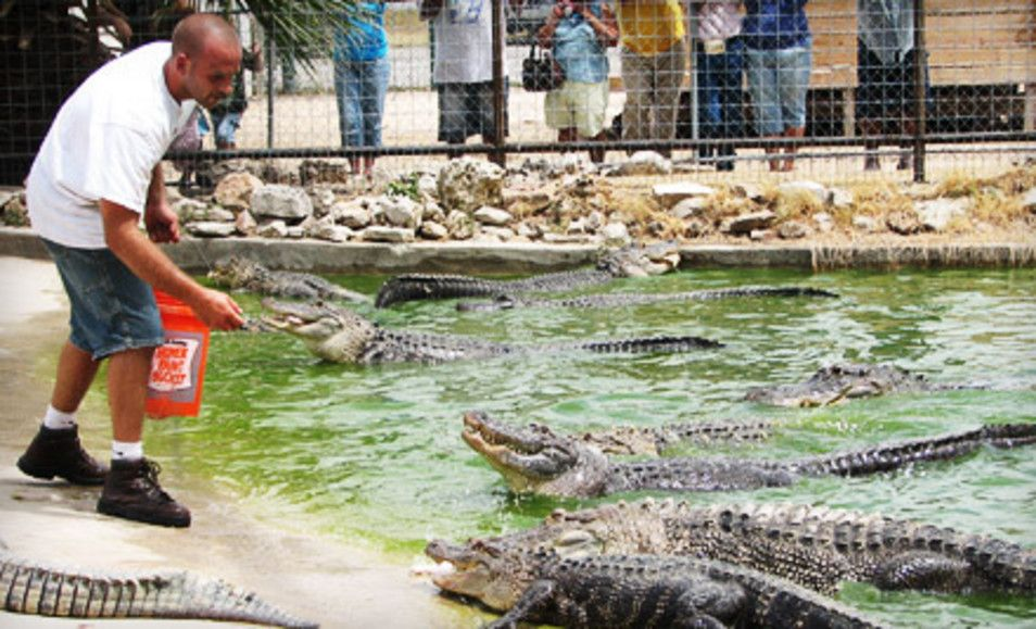 Groupon - Visit to Animal World and Snake Farm Zoo for Two or Four Adults