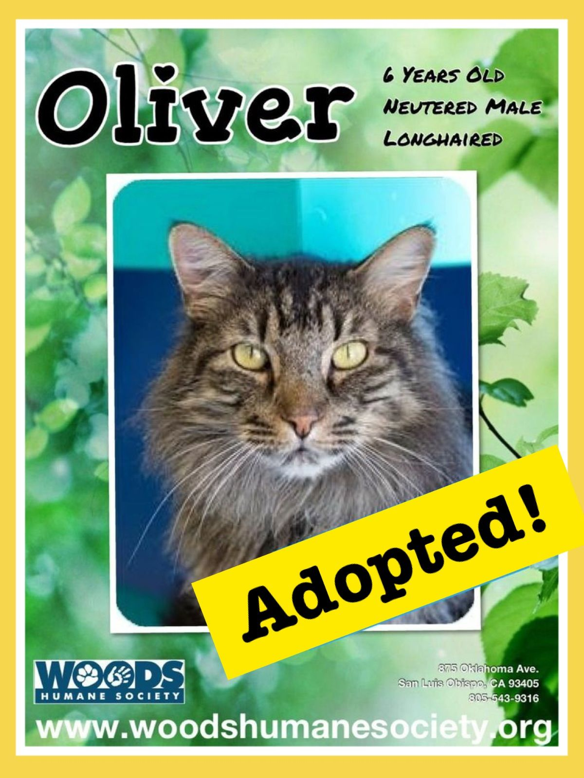 Adopted! (With images) Humane society, Cat shelter, Adoption