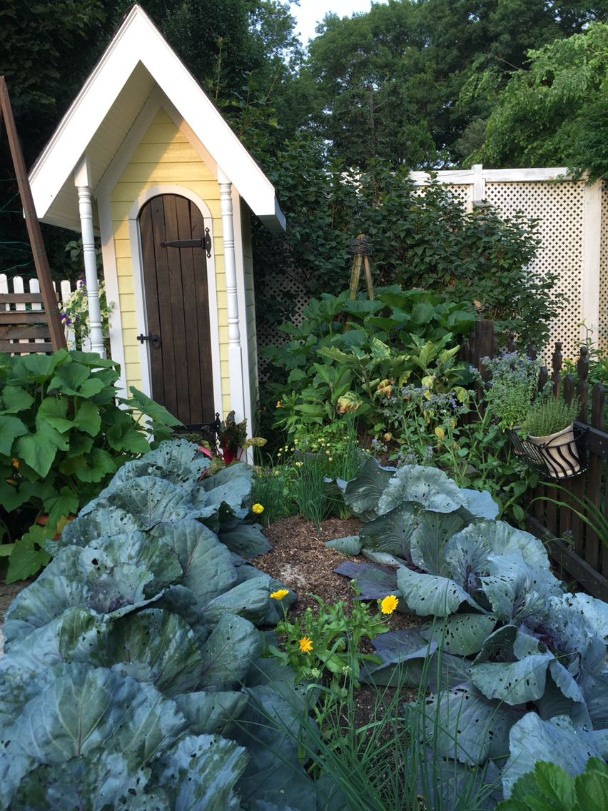 Potager vegetable garden , year two