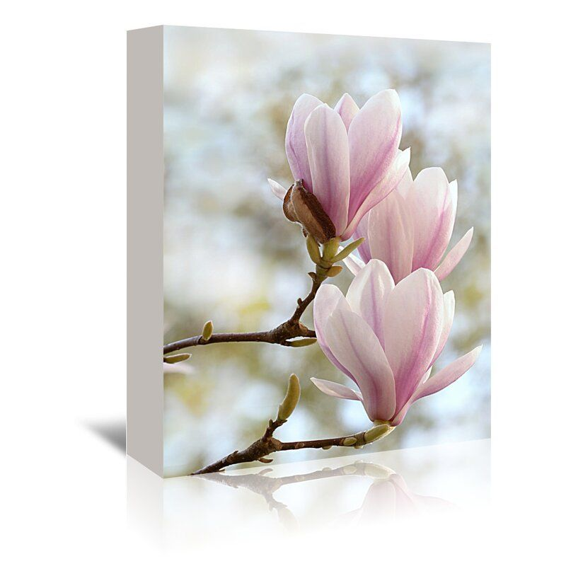 Magnolia Flower Bloom Photographic Print On Wrapped Canvas In 2020 Magnolia Flower Painting Prints Painting Frames