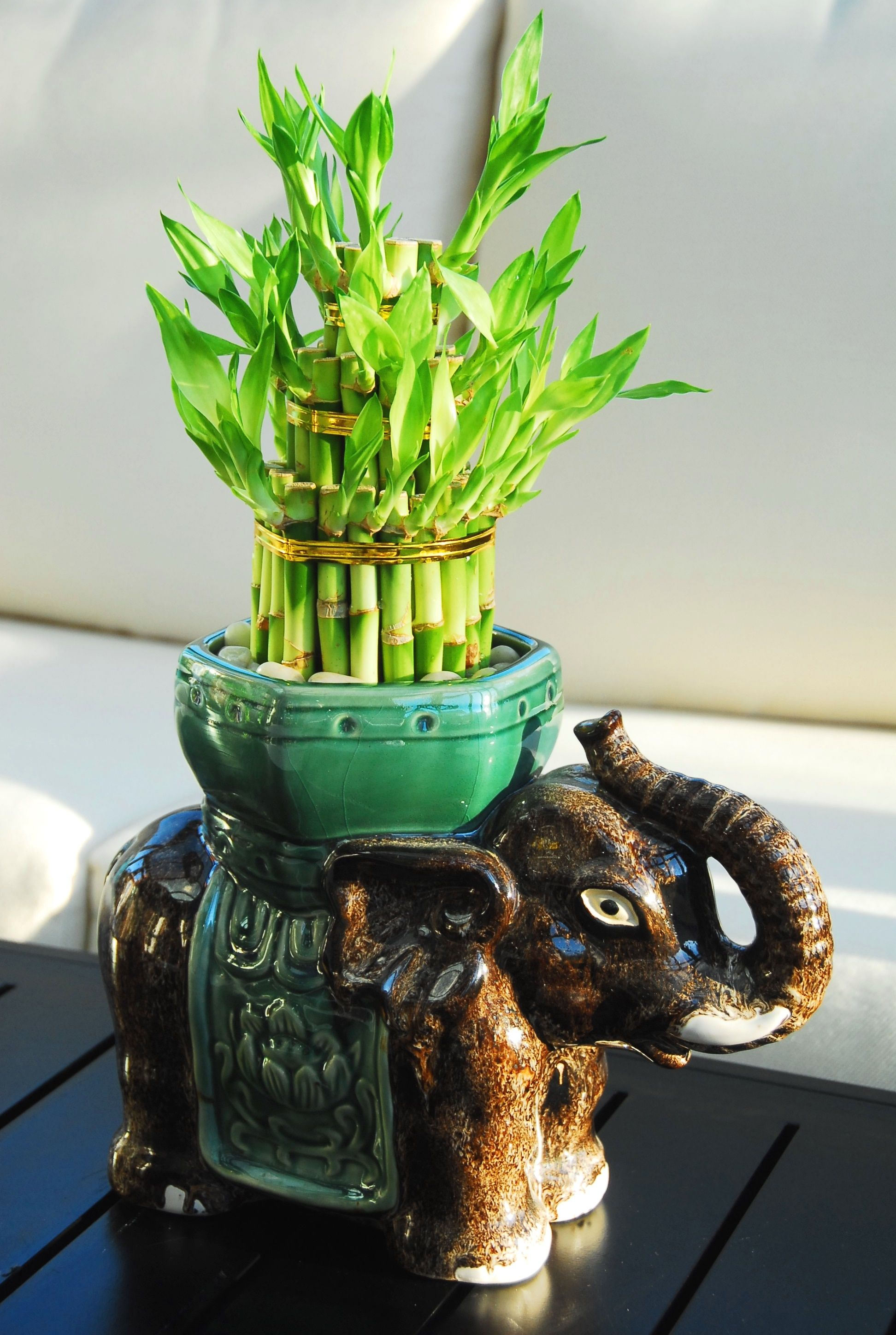 3Tiered Lucky Bamboo in Elephant Pot (39.99) This 3