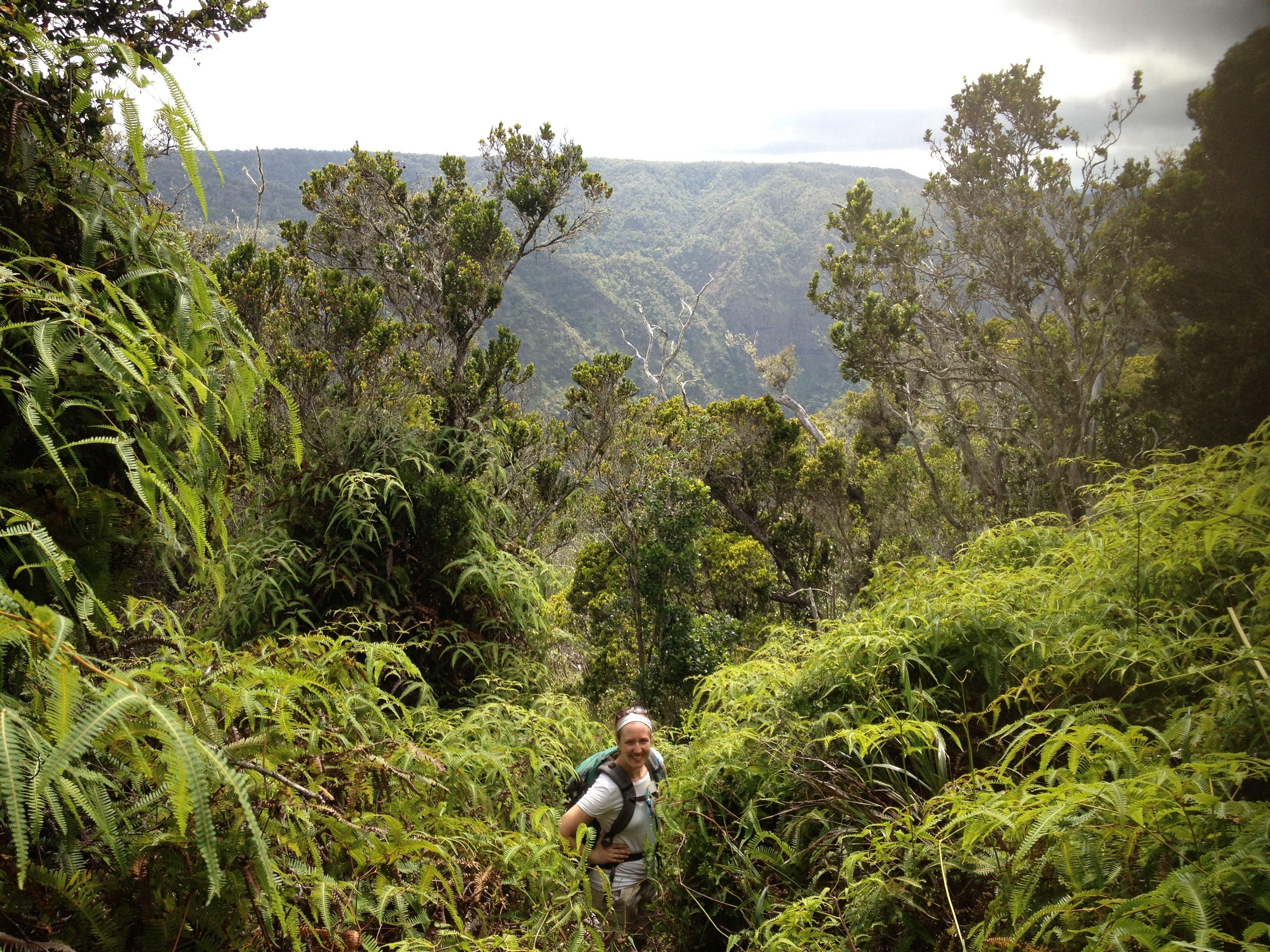 Hiking The Rainforests Of The Mohihi Waialae Trail In Wiamea Canyon Waimea Canyon Kauai Scenery