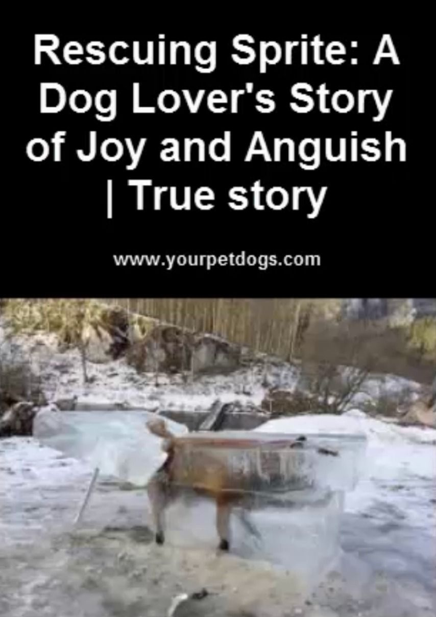 Rescuing sprite a dog lovers story of joy and anguish