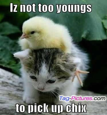 Cute Animal Couples Quotes