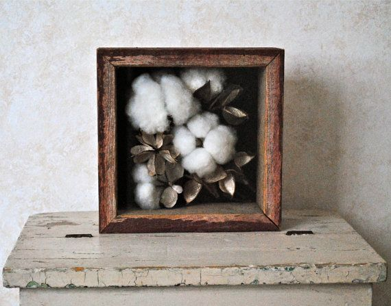 2nd Wedding Anniversary Cotton Gifts: Natural Cotton Boll Display