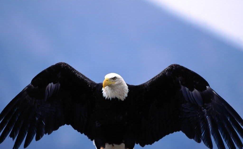 105+ Download Gambar Hewan Burung Gratis