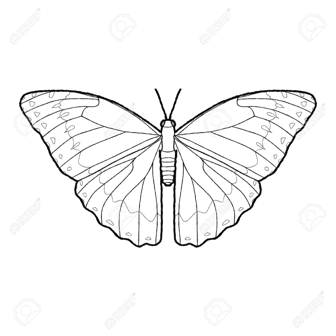 Blue Morpho Butterfly Animal Vector Illustration Hand Drawn Cartoon Art Sponsored Animal Animal Vector Illustration Animal Vector Blue Morpho Butterfly