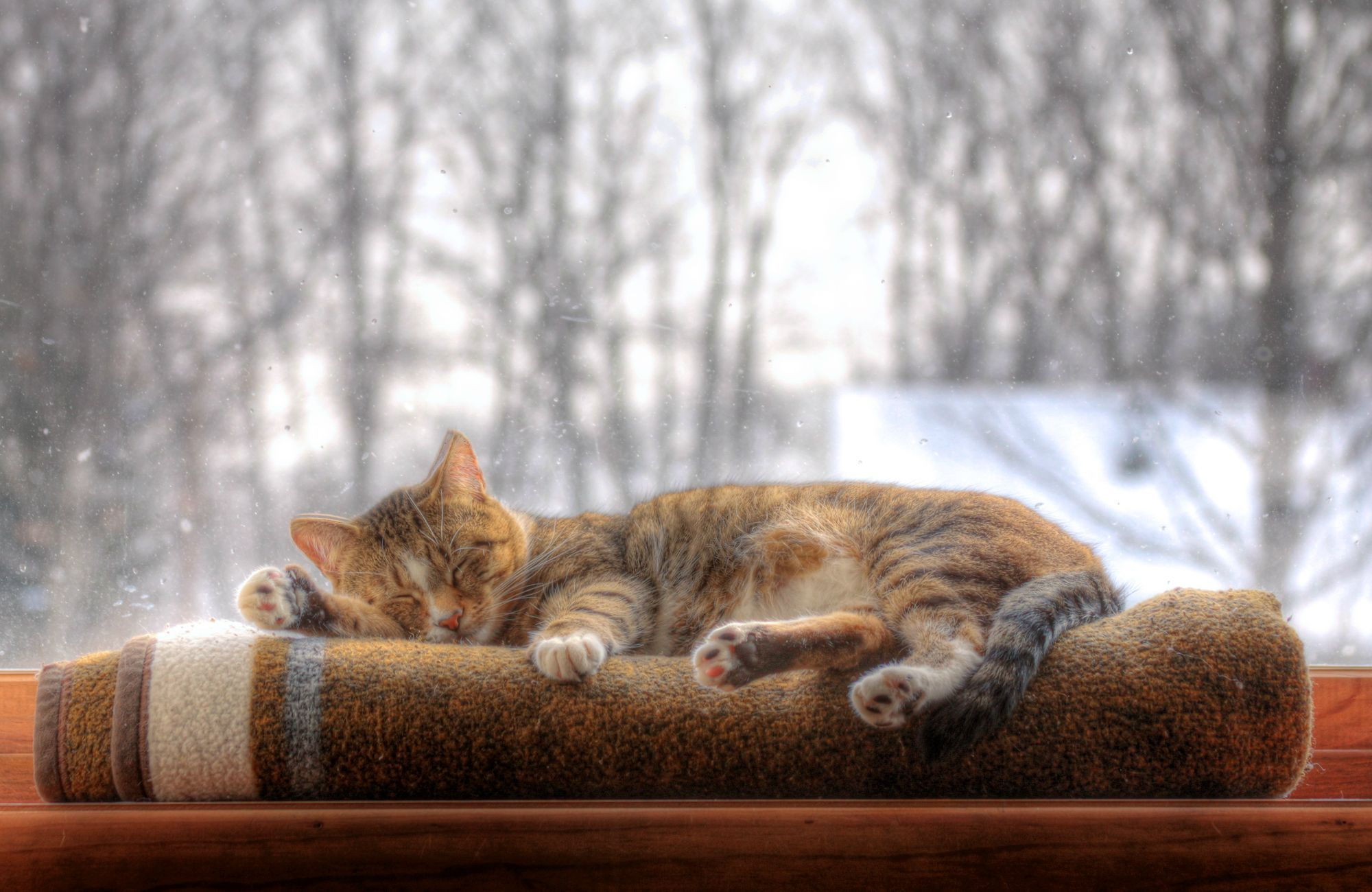 An Hdr Photo Of My Cat Sleeping In The Window In 2020 Cat Sleeping Cats Cute Cats