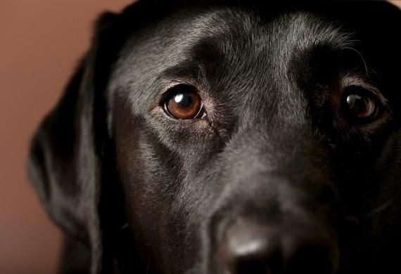 8 Common Eye Problems In Dogs Petmd Dog Seizures Epilepsy In