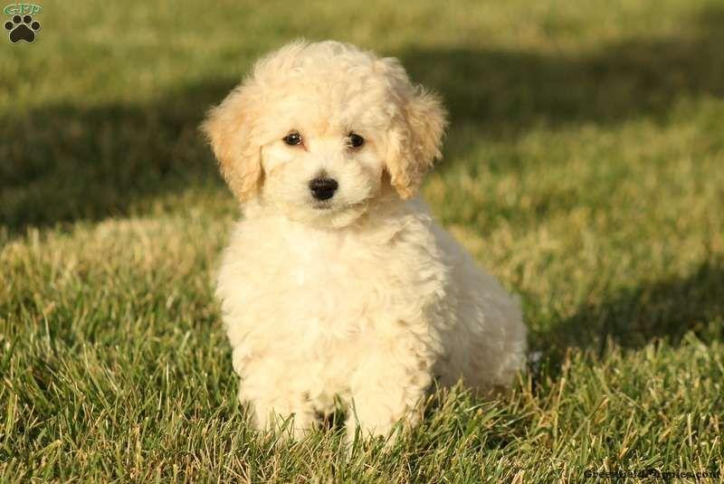 Pin On Cute Doggies