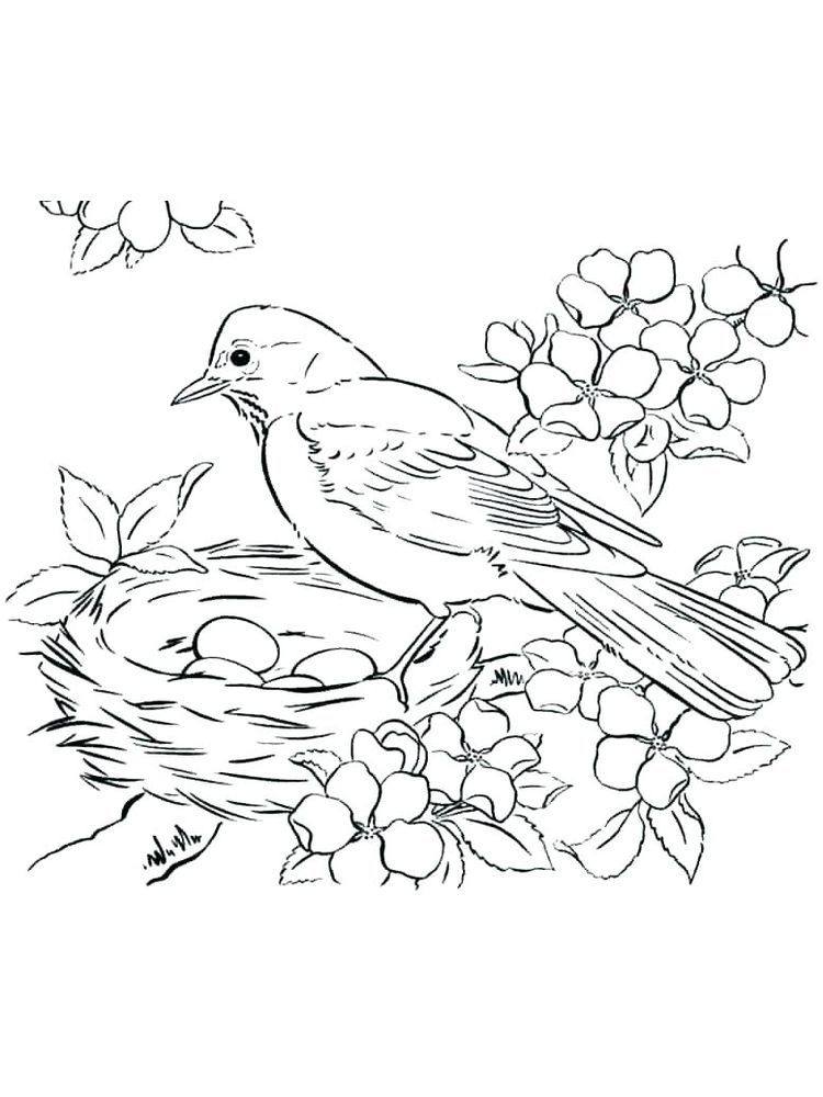 Bird Coloring Pages Online The Following Is Our Bird Coloring Page Collection You Are Free To Downlo In 2020 Bird Coloring Pages Animal Coloring Pages Coloring Pages
