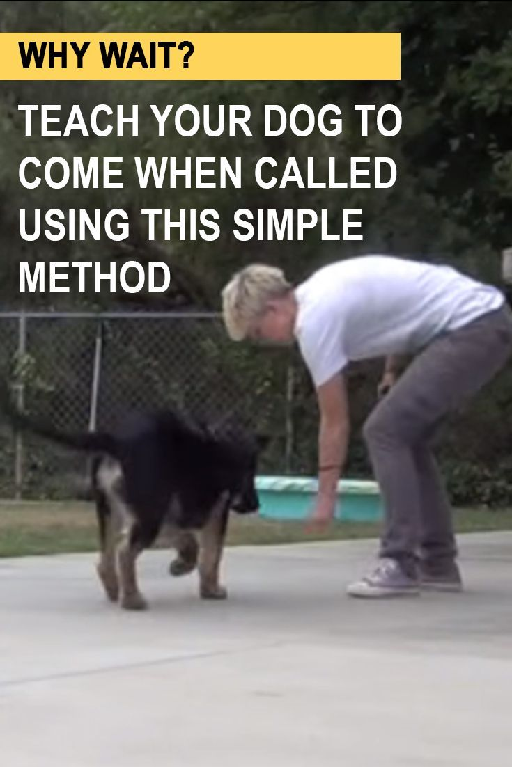 Dog Training Teach Your Dog To Come When Called Dog Training
