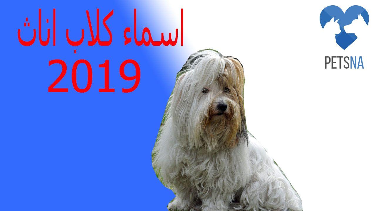 اسماء كلاب اناث 2019 افضل 100 اسم للكلاب البنات