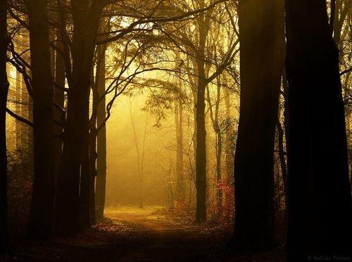 The_secret_passage_by_nelleke-d5eoh7j_large