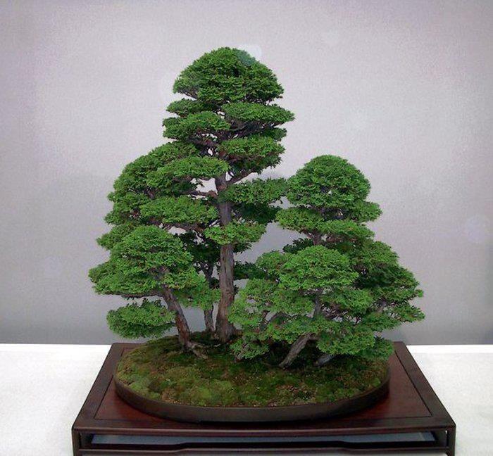 Autumn Bonsai Forest I Love Bonsai Trees Please Check Out My Website Thanks Www Photopix Co Nz Bonsai Forest Juniper Bonsai Bonsai Tree