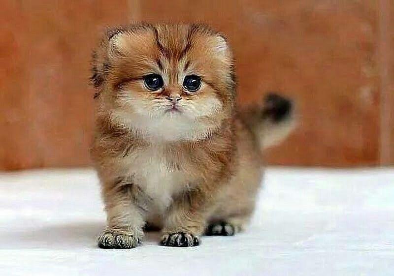 OMG. . So cute..