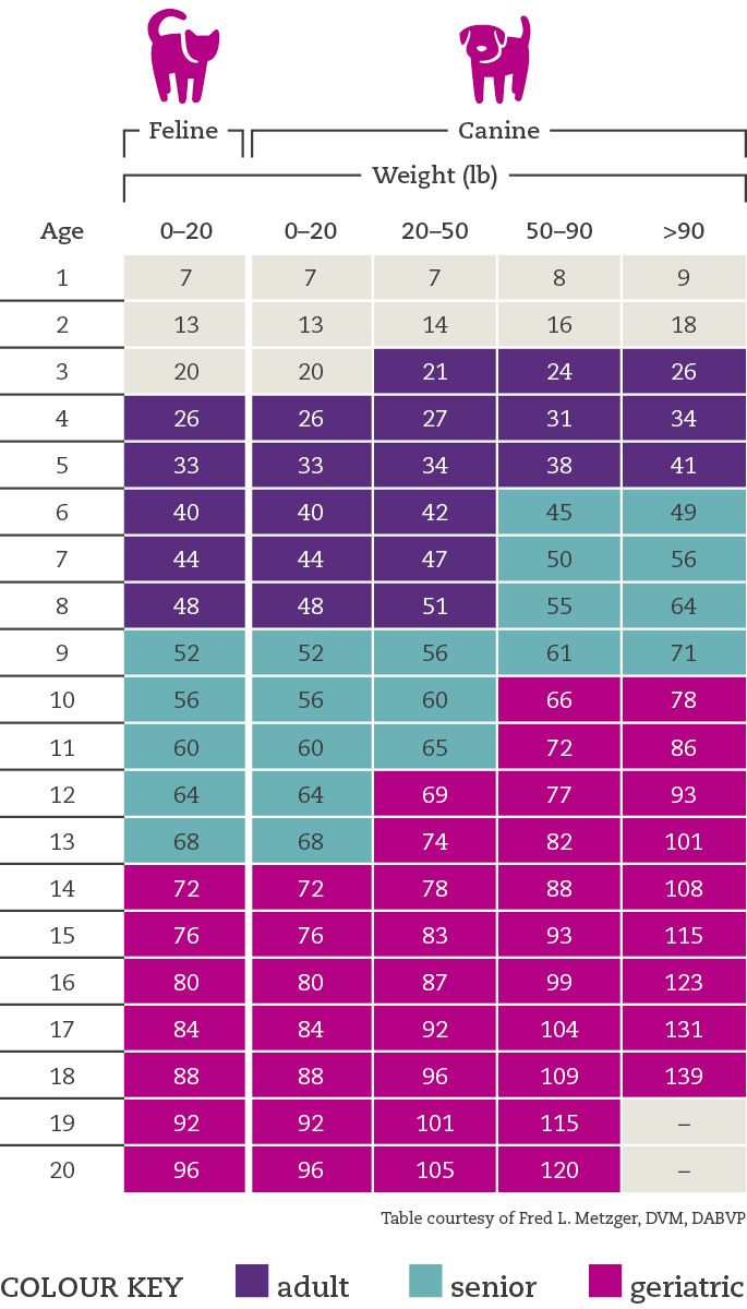 Dog And Cat Age Calculator What S The Real Age Of Your Pet Cat Age Chart Cat Ages Dog Ages