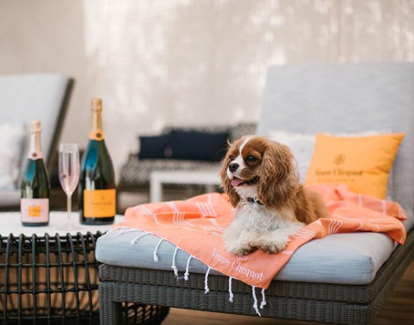 Ojai Valley Inn Hotel Pool 10 Best Dog Friendly Hotel Destinations