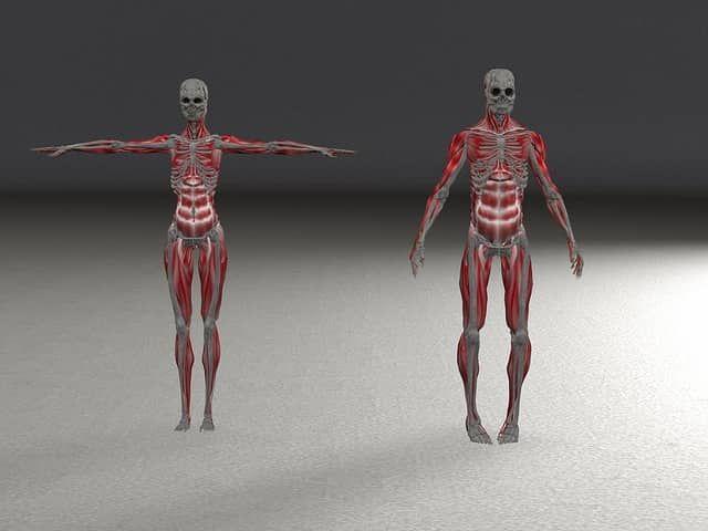 Free Anatomy Ebooks Online Ebooks Online Medicine Book And Anatomy