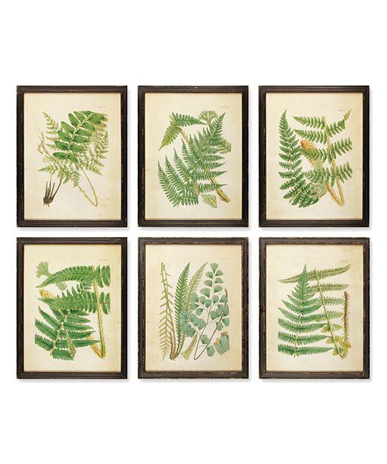 Study of Ferns Framed Print - Set of Six