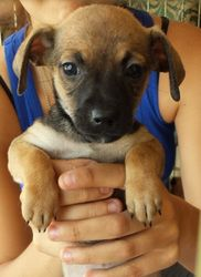 Bubbles Is An Adoptable Chihuahua Dog In Porter Ranch Ca See Video Of The Whole Litter Http Youtu Be Zpkhw0f Lg8 Chihuahua Dogs Dogs Cattle Dog