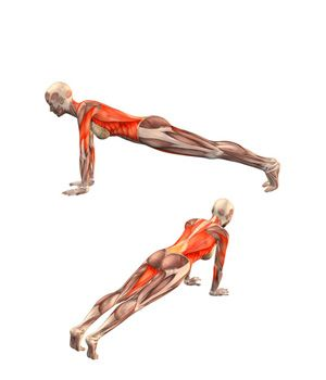 dandasana plank pose  …  yoga anatomy yoga asanas yoga