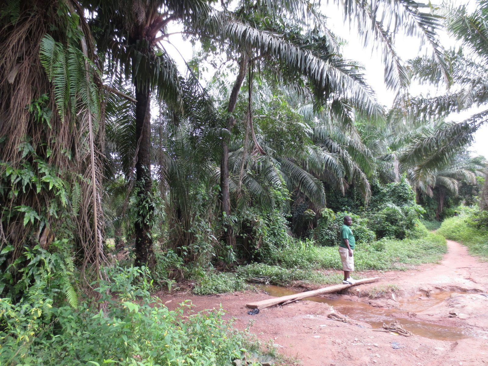 The lush tropical surrounds of Kitikpa in the wet season