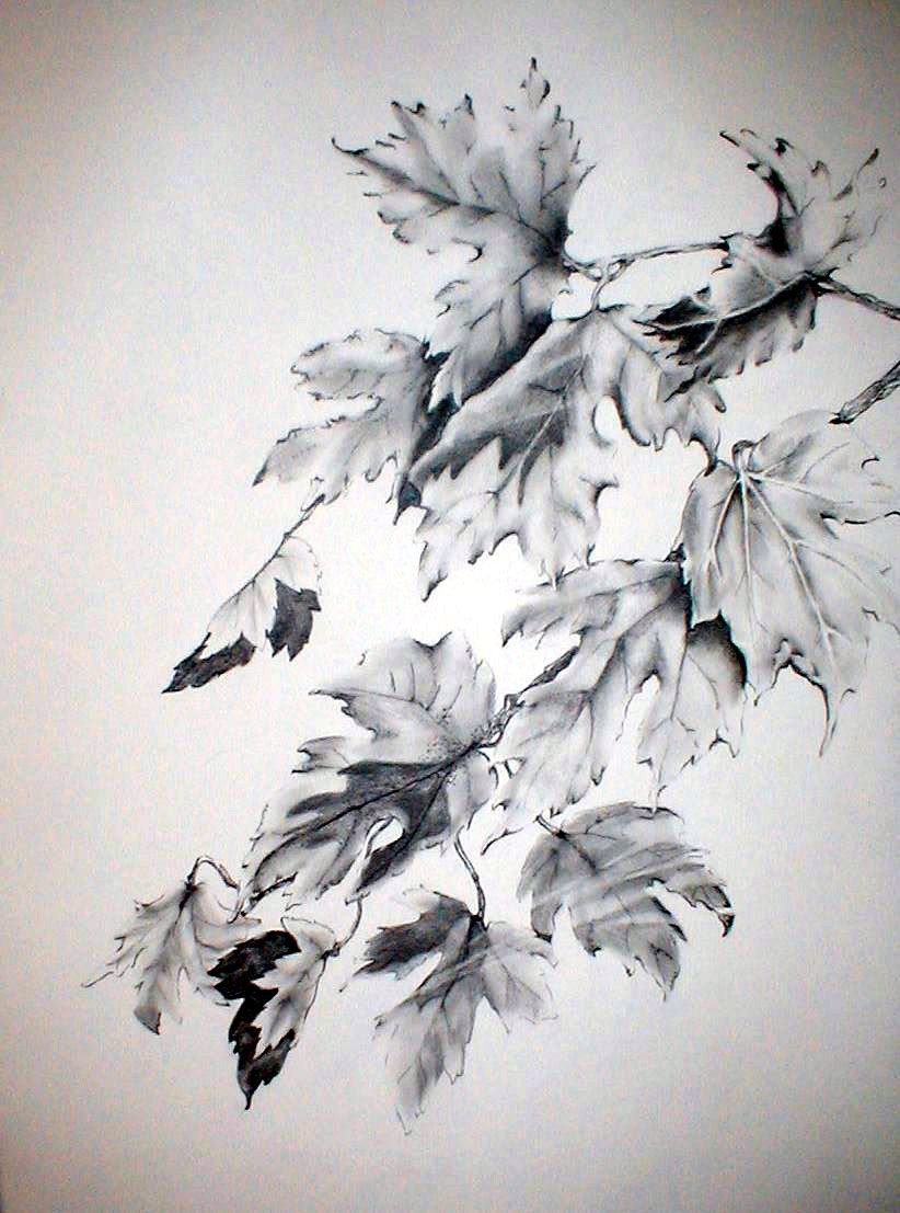 Fall leaves pencil drawing