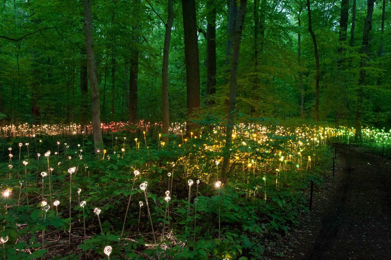 Instalação de Iluminação em Longwood Gardens. Bruce Munro. Longwood Gardens, Kennett Square, Pensilvania, Estados Unidos. 09 de Junho a 29 de Setembro de 2012.