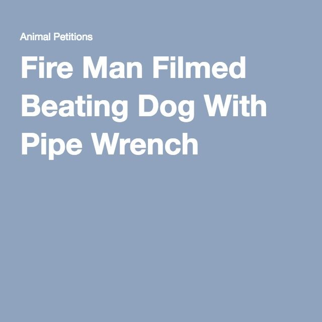Fire Man Filmed Beating Dog With Pipe Wrench  Petitions  Pledges
