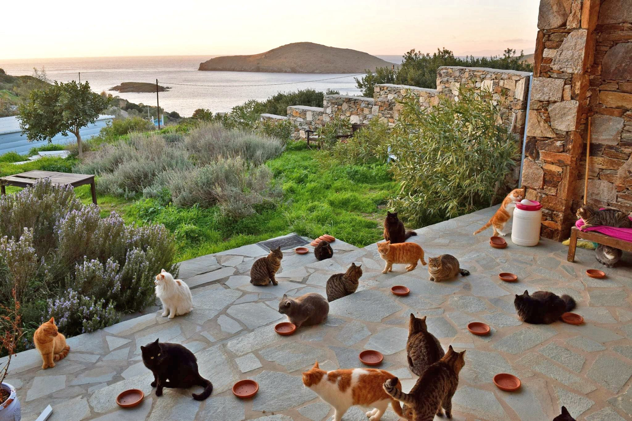 Count meow in get paid to live on a greek island and