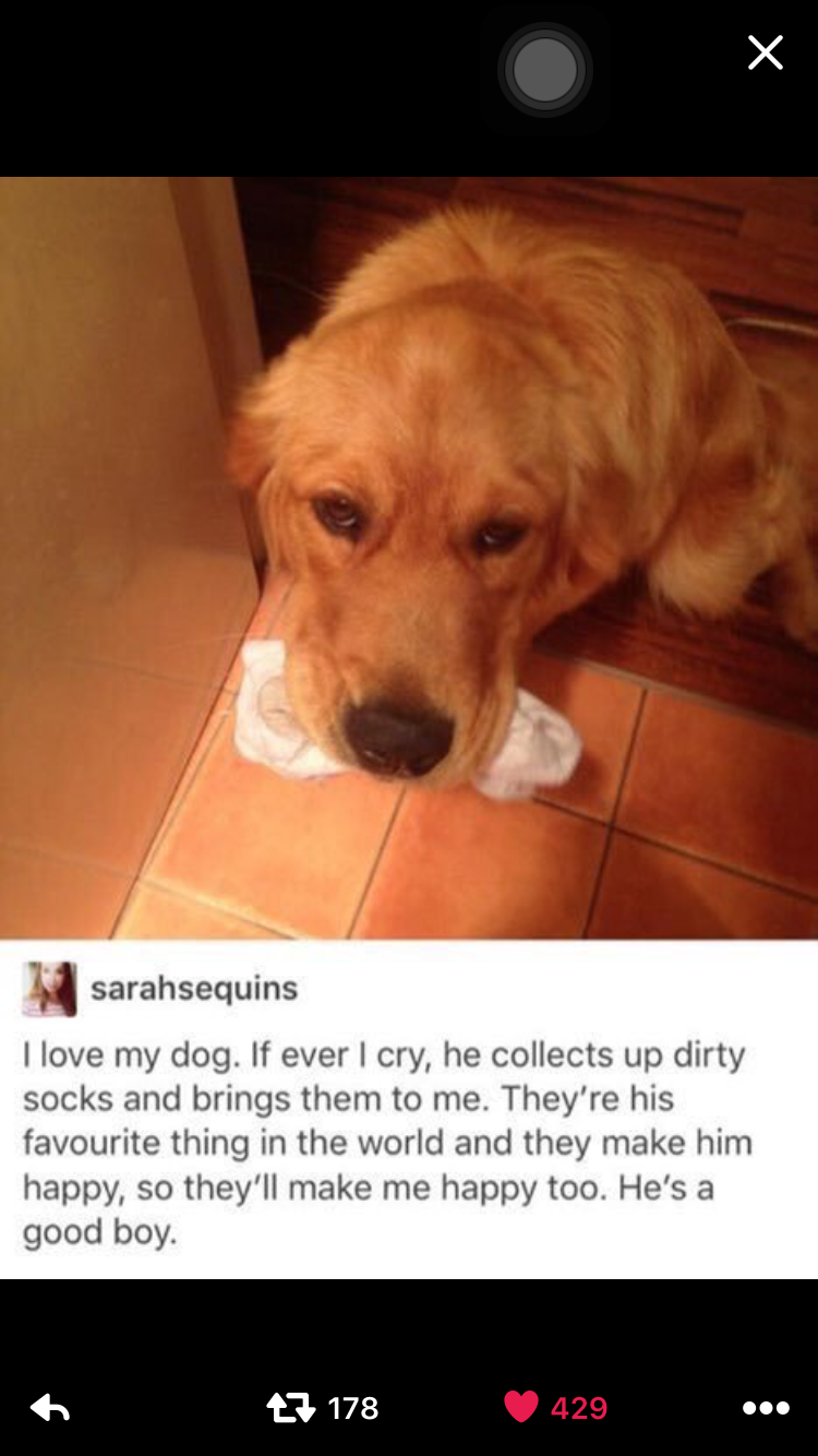 Dog and socks