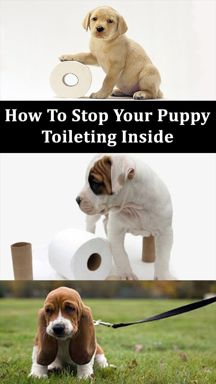Secrets to toilet training how to stop your puppy toileting inside