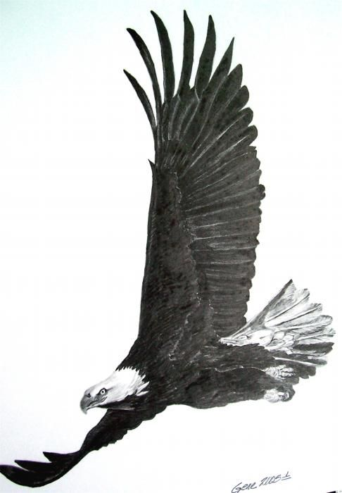 santanoriess flying eagle drawing winter scenes pinterest