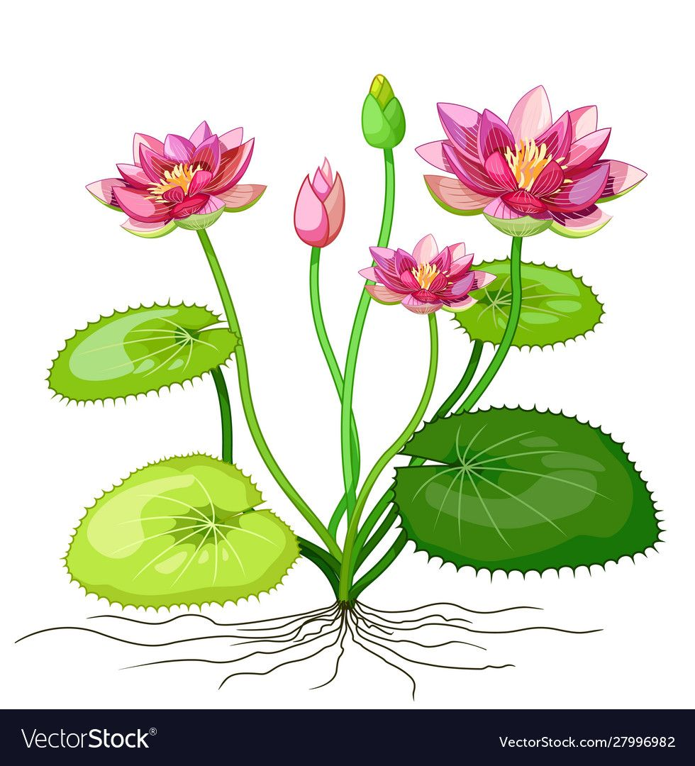 Funny pink lotus ivy flower plant cartoon vector image on