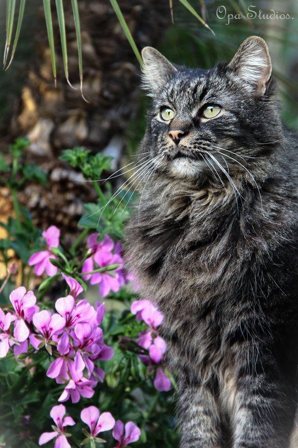 Cat Portrait by mario jerz, via 500px